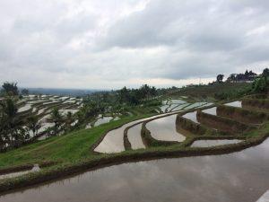 rizieres-bali