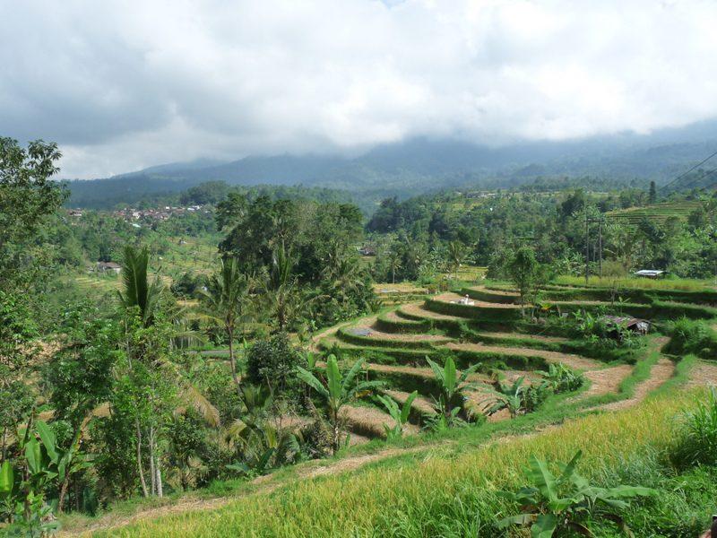 Bali voyage 180617 au 030717 536