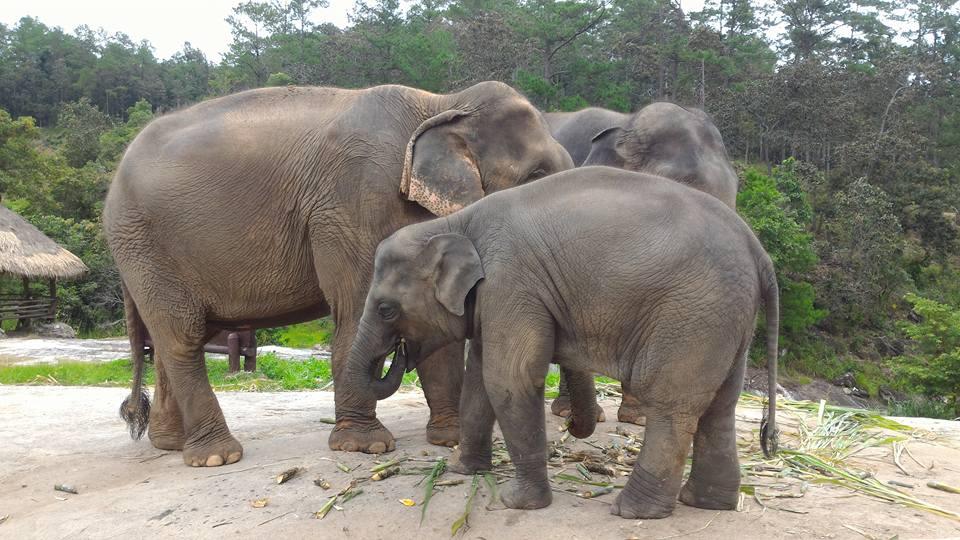 patara elefant camp