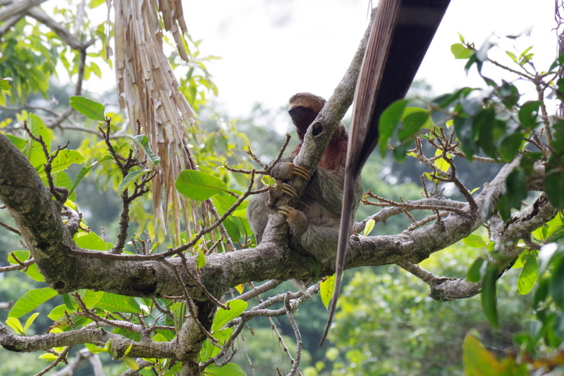 PARESSEUX COSTA RICA