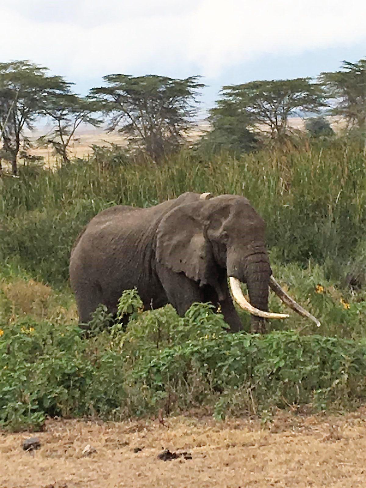 TANZANIE ELEPHANT